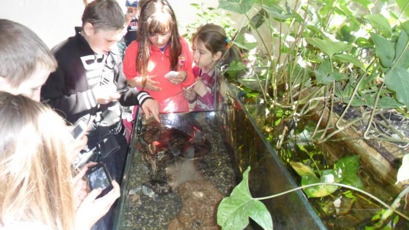 Excursie la Muzeul de Științele Naturii din Suceava