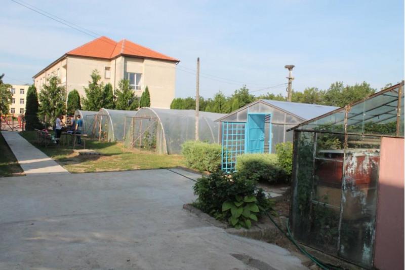 """Una dintre activitățile importante ale Liceului Tehnologic Agricol """" Alexiu Berinde"""" Seini este instruirea practică a elevilor, speializarea Tehnician horticultor, realizată în incinta școlii , în sectorul de sere și solarii."""