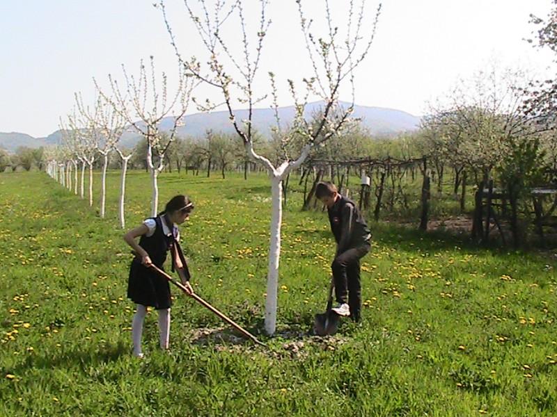 Proiect educational avand ca scop incurajarea consumului de fructe in scoli