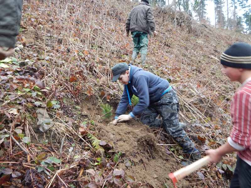 Plantare arbori