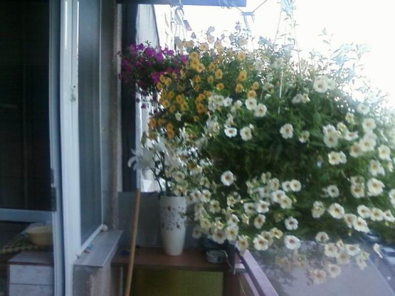 """Laboratorul de biologie a fost amenajat in cadrul proiectului """"Coltul verde"""" - cu un mare numar de plante si flori."""