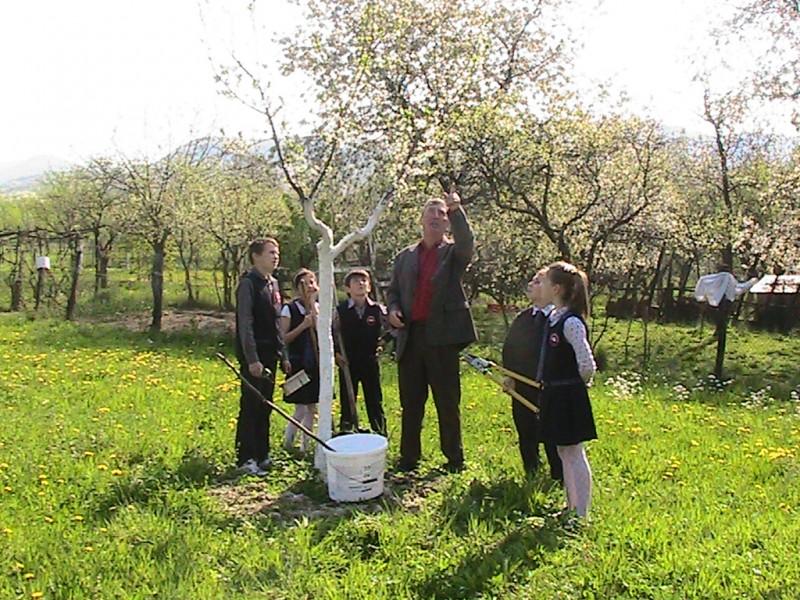 Proiect educational avand ca scop incurajarea consumului de fructe in scoli.