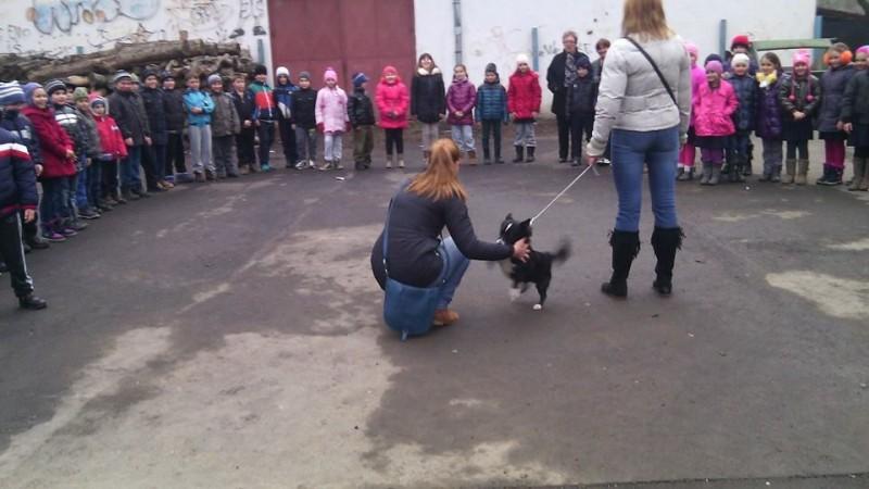 """Asociația """"Prietenii animalelor"""" împreună cu Școala George Cosbuc"""